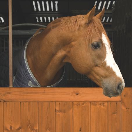 Equine & Estate